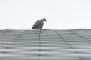 Roofing Pests Roof Maintenance